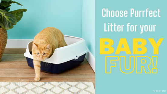 Calling All Cat Parents… This is for you!